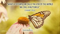 """What a caterpillar calls the end of the world we call a butterfly"" ~ Eckhart Tolle"