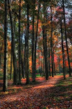✯ Leafy Forest Trail