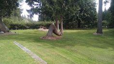 This tree [x-post /r/mildlyinteresting] : pics