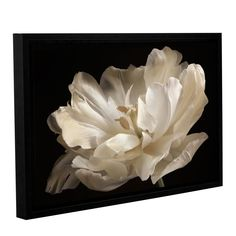 ArtWall Cora Niele's Tulip Gallery Wrapped Floater-framed