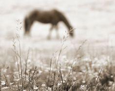 horse photography, equine, equestrian decor, sepia, 8 x 10 print. $35.00, via Etsy.