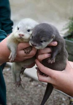 Please. | Community Post: 14 Reasons Why Otters Are Perfect