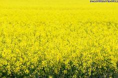 Bratislava, Vineyard, Country Roads, Plants, Travel, Outdoor, Html, Flowers, Fields