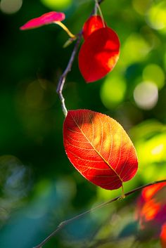 I took my first photos in our backyard this morning after moving in our new home. These are the first few leaves that started to change colors, and I hope my backyard will turn into a spectacular Autumn Color Show. Paris 11, Rain Wallpapers, Bokeh Photography, Autumn Scenes, Autumn Lights, White Doves, Green Nature, Photo Backgrounds, Pretty Pictures