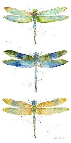 Artistic Dragonfly
