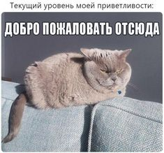Фотоприколы и смешные картинки! / Приколы Fanny Photos, Funny Cats, Funny Animals, Hello Memes, Funny Quotes, Funny Memes, Quote Aesthetic, Stupid Memes, Life Humor
