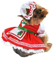 Candy Cane Cutie Dog Costume
