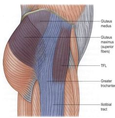 The most commonly cited reason for stretching the iliotibial (IT) Band is to alleviate knee pain. Before we can state the best way to stretch it we need to talk about what the IT band is and then how it influences knee pain. What is the IT band? Hip Pain, Knee Pain, Back Pain, Fascia Lata, Biceps Femoral, K Tape, It Band Stretches, Knee Exercises, Iliotibial Band Stretches