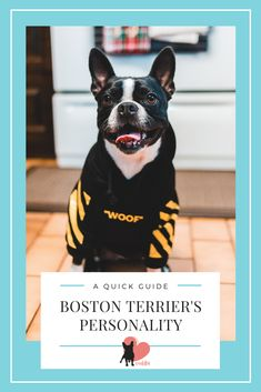 Wondering what are Boston Terriers like, their temperament and personality… Discover what's it like to own one?! #bostonterrier #bostonterrierbehaviour #bostonterrierpersonality #bostonterriertemperament  #bostonterrierlove #bostonterrierowner #owningabostonterrier #dogbehaviour #doglove #dogbond #dogbonding #dogmom #dogowner #dogtemperament