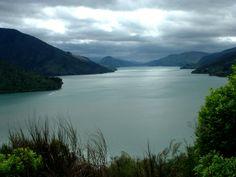 Nouvelle Zélande, la baie de Picton. www.plantesdusud.com