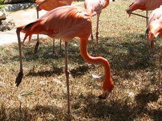 jardim zoologico 32.jpg