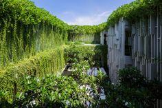 resort green walls (5)