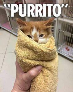We'll take 5. #kittens