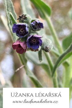 Blueberry, Herbalism, Fruit, Herbal Medicine, Berry, Blueberries