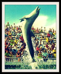 FLIPPY 8x10 dolphin art photo print ~  vintage Florida 1930's Marineland