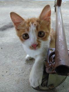 a cat named mika