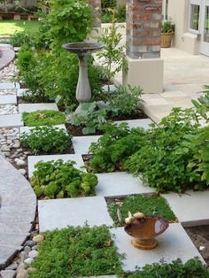 Herbs between stepping stones for eatable green foliage.