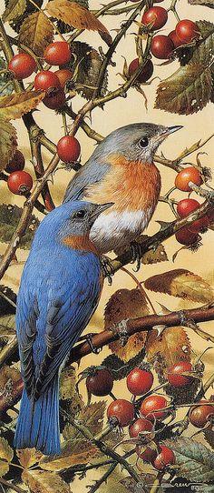 """Carl Brenders """"Bluebirds Forever"""" 1980"""