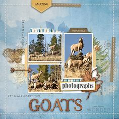 It's All About The Goats copy - Community Layouts - Gallery - Get It Scrapped
