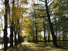 Park wokół pałacu Skrzyńskich w Zagórzanach - Gmina Gorlice