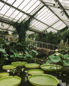 Kew Gardens doing it's mega-awesome-massive-Lily-pad thing like it isn't even a big deal. #HaarkonInLondon #HaarkonGreenhouseTour