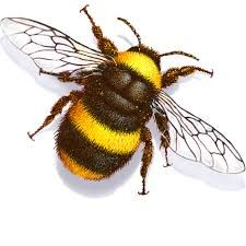 Image result for bumble bee flying