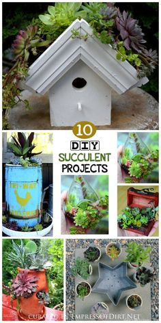 Succulents are living works of art! These drought-tolerant plants are extraordinarily versitile due to their shallow roots and minimal watering needs. Come grab ideas for planting them in any container. Projects here include a treasure chest, birdhouse greenroof, star-shaped cake pan, bird bath, and more.