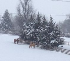 """Ruth Worrell of Staunton says """"Horse Play...in the snow"""" #WHSVsnow"""