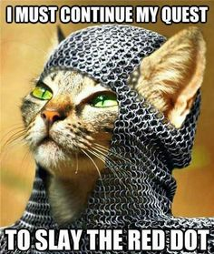 Cat in chainmail!!