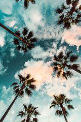 Palm trees at sunset   Ryan Longnecker