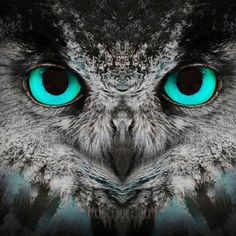 THE GUARDIAN - OWLS