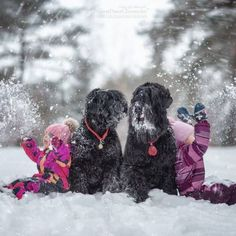 Photographer Andy Seliverstoff Precious Pinterest Photographers - Tiny children and their huge dogs photographed in adorable portraits by andy seliverstoff