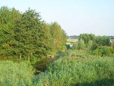 Natuurkampeerterrein de Kreek. Nieuw-Vossemeer. Noord-Brabant grens Zeeland. 15 plekken 1.2 ha.