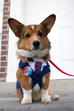 Things that make you go AWW! Like puppies, bunnies, babies, and so on. A place for really cute pictures and videos! Cute Baby Animals, Animals And Pets, Corgi Gif, Cute Animal Videos, Pet Collars, Dog Owners, Best Dogs, Cute Dogs, Dogs And Puppies
