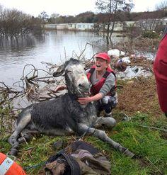 Vivez le sauvetage émouvant de cet âne qui allait se noyer. Sa réaction est magnifique !