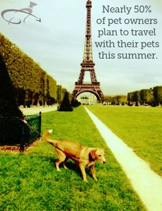 50% of pet owners plan to travel with their pets this summer.