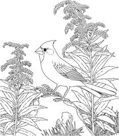 Northern Cardinal and Goldenrod Kentucky Bird and Flower Coloring page