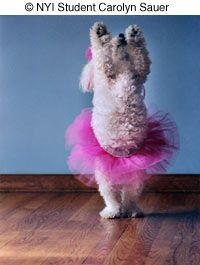 © Student Carolyn Sauer. New York Institute of Photography - Pet Photography Tips