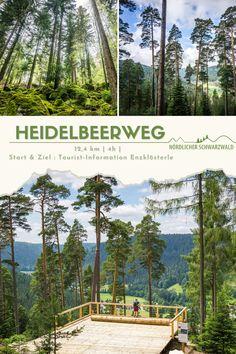 """Dieses Wandern entführt Sie in die Welt des """"blauen Goldes"""". Entlang der Kilometer stehen informative Stationen und eine Aussichtsplattform mitten im Wald. Der Heidelbeerweg bietet sehr schöne Fotomotive für Ihr Urlaubsalbum. Schöne Waldpfade führen auf dem 12,7 km langen Rundweg bis zum Höhepunkt der Durchquerung einer moosbewachsenen Felsenlandschaft.  #Schwarzwald #Nordschwarzwald #BlackForest #Wandern #Premiumweg #Heidelbeere #Enzklösterle #Rundtour #SchwarzwälderGenießerpfad Travel Around The World, Around The Worlds, Weekend Trips, Happy Weekend, Staycation, Germany Travel, Travel Destinations, Places To Go, Road Trip"""