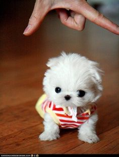 Tiny Pup. Cuteness overload! <3
