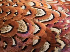Feathers Texture 1 Feather Texture, Feathers, Feather, Furs