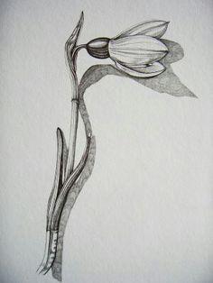 Snowdrop drawing