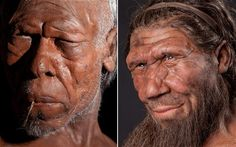 Meet the ancestors - best ever reconstruction of early humans (left) and Neanderthals (right)