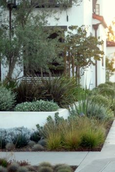 Landscape Garden Design streetside with grasses and succulents