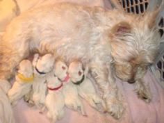 newborn with colored collars. Our Maggie had the yellow collar when we picked her. So precious!