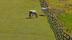 horses summer field hd wallpapers