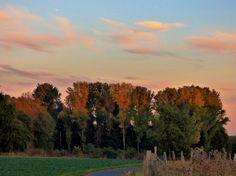 herbstliche Bäume auf den Fledern bei Delhoven, Foto: S. Hopp