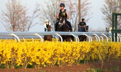 Horticultural icons at Keeneland, Churchill Downs blooming early