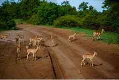 Chobe Nationalpark Botswana und Victoriafalls Zambia-39