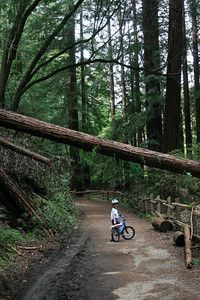 Redwood Regional Park is a wonderful gem of a park.  Walking its trails, underneath the canopy of redwoods, you are immediately transported to a serene, peaceful place far way from the hustle and bustle of the major metropolis that is the Bay Area. The park is located on Redwood Road, just a few miles over the ridge from downtown Oakland.